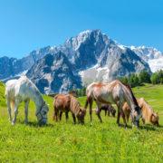 Calendario Valle d'Aosta 202015