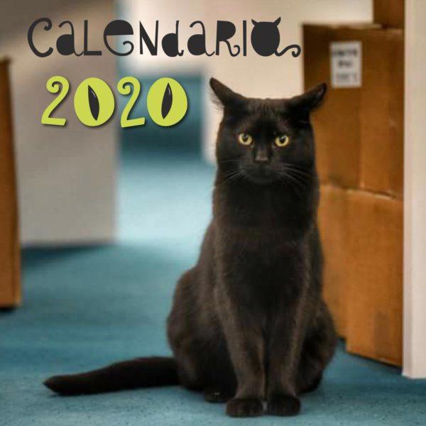 Calendario-Libro-Gatto-PiazzaChanoux
